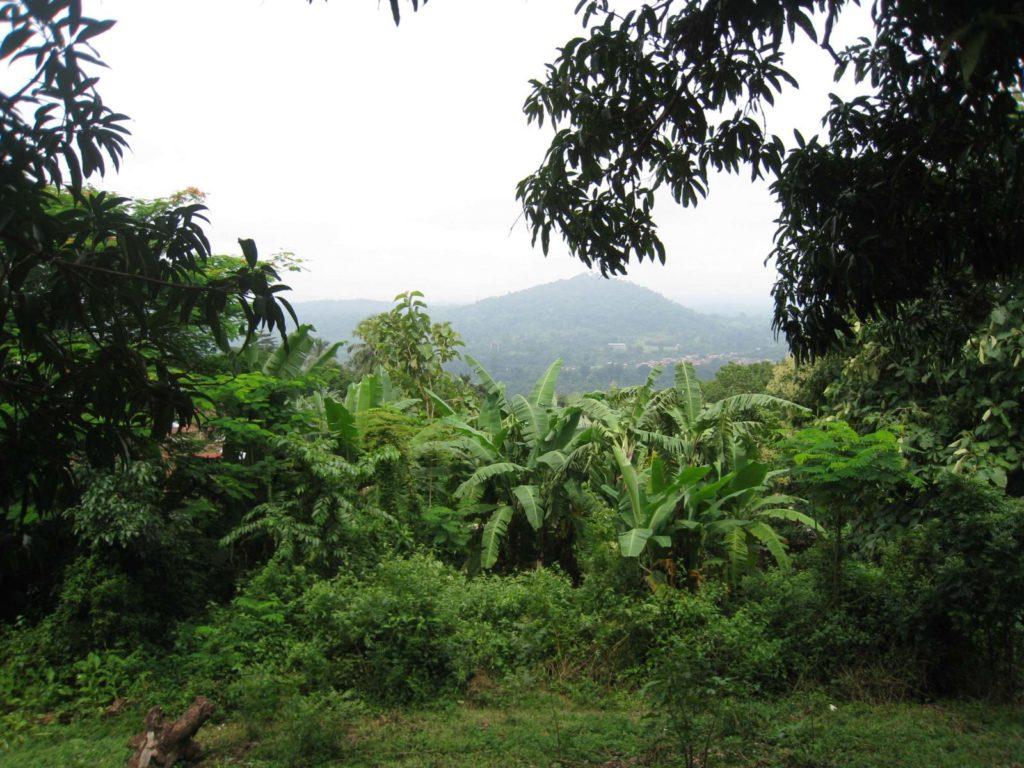 Projet de restauration de 35 000 hectares des forêts