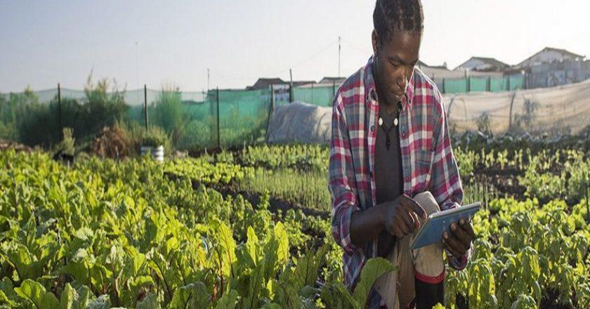 Togo Une nouvelle plateforme de formation e-learning pour le secteur agricole