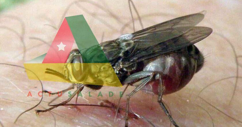 la Trypanosomiase Humaine Africaine (THA)