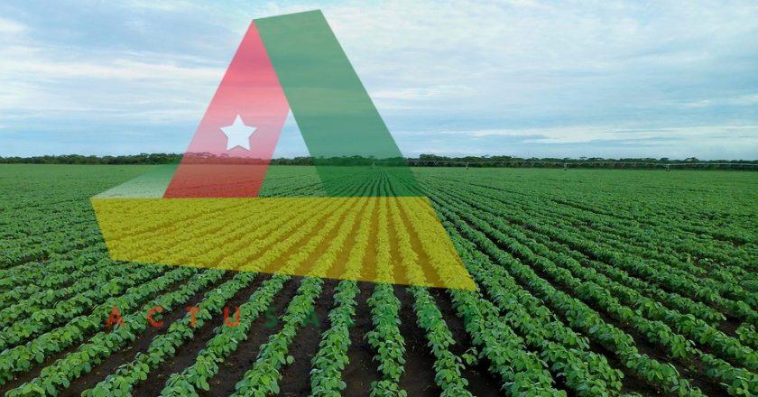 gouvernement Togolais