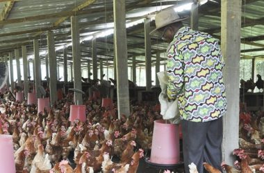 le canton de Djagblé touché par la grippe aviaire