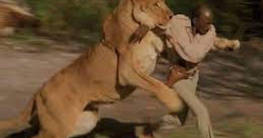 Pour tester sa foi devant ses fidèles, ce pasteur défi un lion